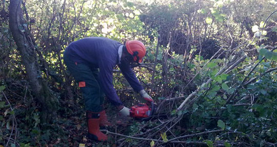 Andrew coppicing woodland